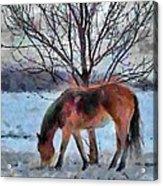 American Paint In Winter Acrylic Print by Jeff Kolker