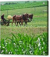 Amish At Work Acrylic Print by Dottie Gillespie