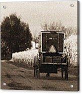 Amish Buggy And Wagon Acrylic Print
