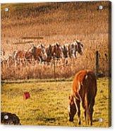 Amish Transportatin All Sizes Acrylic Print
