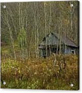 Among The Birches 0020 Acrylic Print