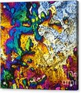 Ampicillin Lm Acrylic Print