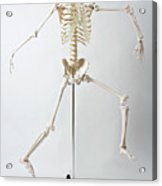 An Anatomical Skeleton Model Running And Jumping Acrylic Print by Rachel de Joode