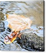An Autumn Day's Rest Acrylic Print