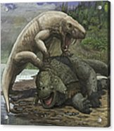 An Inostrancevia Attacks A Scutosaurus Acrylic Print