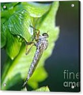 An Insect Resting  Acrylic Print