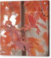 An Orange Fall Tree With Words Acrylic Print