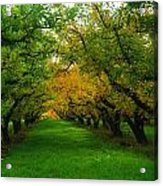 An Orchard Row  Acrylic Print