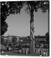 Ancient Cedars And Tombstones Acrylic Print