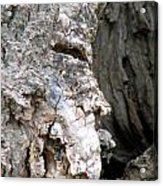 Ancient Rock Cliff Face At Rockwood Conservation Area  Acrylic Print