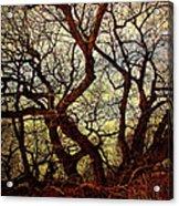 Ancient Winter Tree Acrylic Print