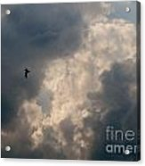 Angel Flight Acrylic Print