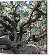 Angel Oak - Johns Island Sc Acrylic Print