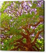 Angel Oak Tree1 Acrylic Print