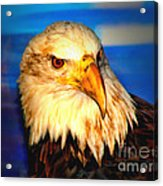 Angel The Bald Eagle Acrylic Print