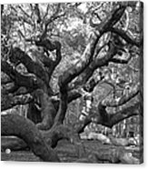 Angel Tree II Acrylic Print