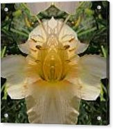 Angelic Lily Acrylic Print