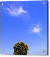 Angels Watching Over Tree Acrylic Print