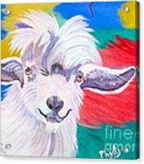 Angora Sweetie Acrylic Print