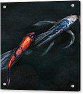 Animal - Fish - Beauty And Grace  Acrylic Print