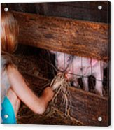 Animal - Pig - Feeding Piglets  Acrylic Print