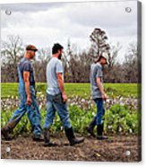 Another Cotton Pickin' Day Acrylic Print