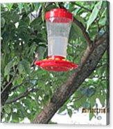 Another Hummingbird Acrylic Print