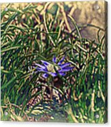 Antiquated Flower Acrylic Print