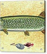 Antique Lure And Pike Acrylic Print by JQ Licensing