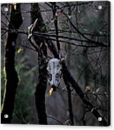 Antlers - Skull - In The Air Acrylic Print