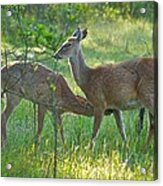 Any Day Now Acrylic Print