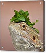 Anyone Seen My Salad? Acrylic Print