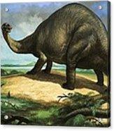 Apatosaurus Acrylic Print