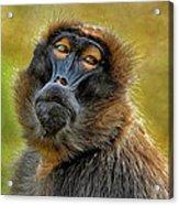 Ape Acrylic Print