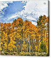Apen Trees In Fall Acrylic Print