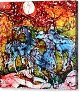 Appaloosas On A Fiery Night Acrylic Print by Carol Law Conklin