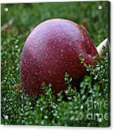 Apple Gravity Acrylic Print