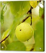 Apple Taste Of Summer Acrylic Print