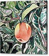 Apple Tree Sketchbook Project Down My Street Acrylic Print