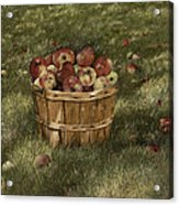 Apples In Basket Acrylic Print