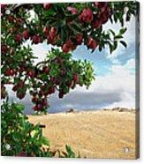 Applessence Acrylic Print