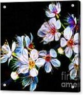 April All Aglow Acrylic Print