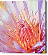 Aquatic Bloom Acrylic Print