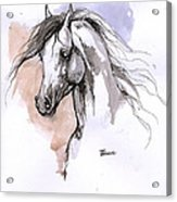 Arabian Horse Ink Drawing 1 Acrylic Print