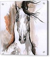 Arabian Horse Ink Drawing 2 Acrylic Print