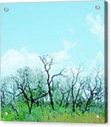 Aransas Nwr Texas Acrylic Print