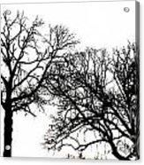 Arboreal Mind Meld Acrylic Print