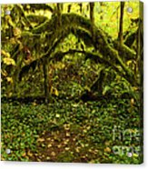 Arches In The Rainforest Acrylic Print