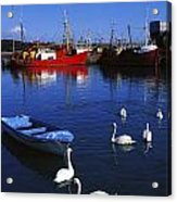 Ardglass, Co Down, Ireland Swans Near Acrylic Print
