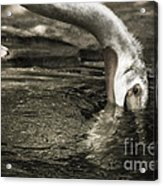 Are You Getting This Acrylic Print